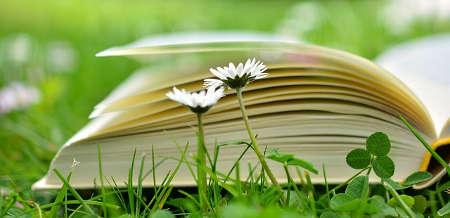 Gartenhaus Buch Buchempfehlung Bücher