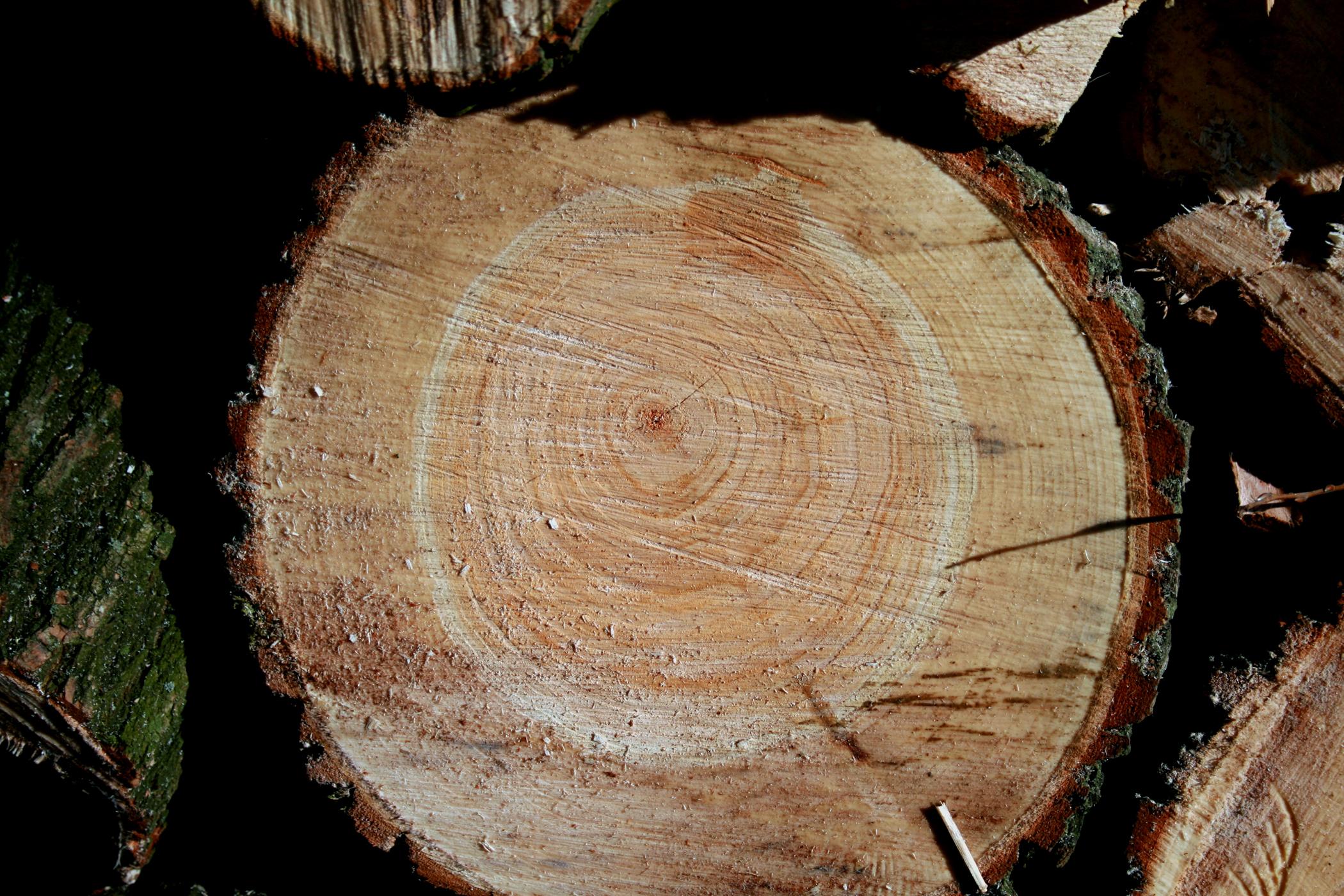 Fichtenholz Holzart