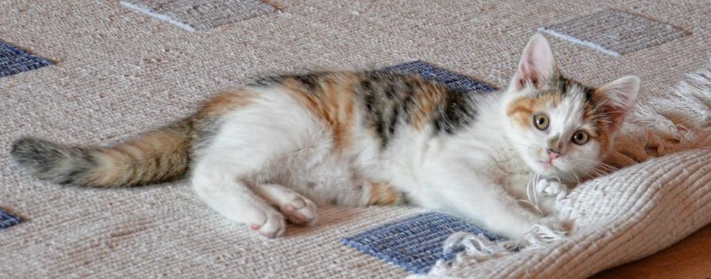 Gartenhaus Bodenbelag Fußboden Katze Haustiere