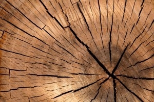 Top 10 Fehler beim Gartenhaus Aufbau - Holzsorte falsch