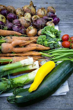 Obst und Gemüse selber anbauen urban gardening