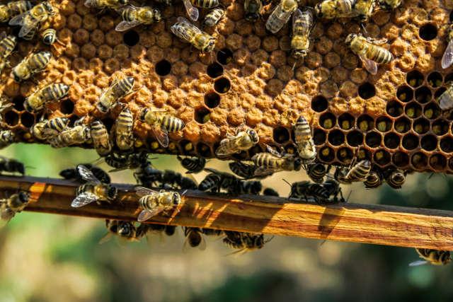Bienennest beseitigen