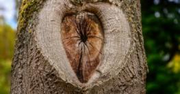 Typische Holzmerkmale